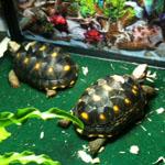 tortoises-1.JPG