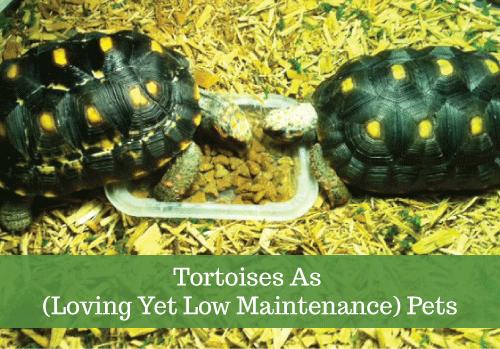 tortoises-2.png
