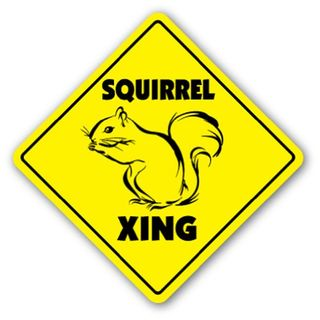 Squirrelcrossing