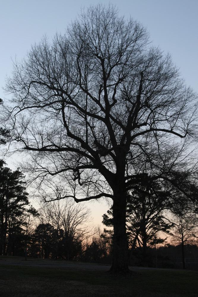 hardwood-at-dusk-small.jpg