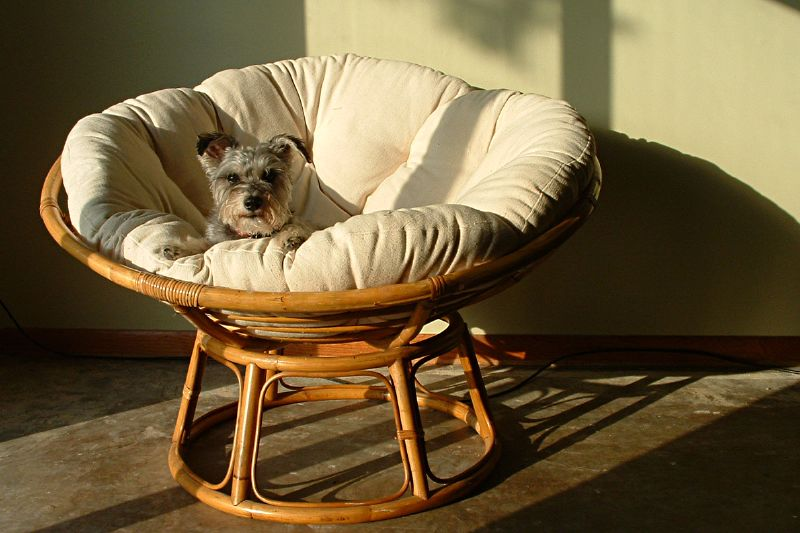 Desire to inspire for Where to buy papasan chair