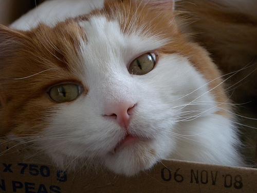 Pet Profile courtesy of Nikon's Coolpix P6000