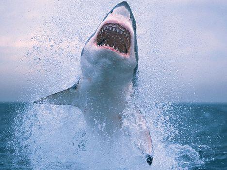 animalplanet_shark_animalplanet_1