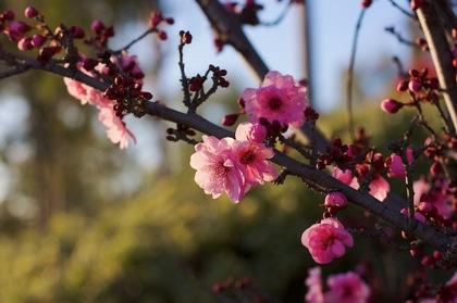 blooming 420.jpg