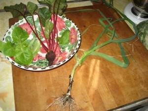 stoop harvest