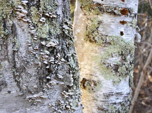 tree-textures.jpg
