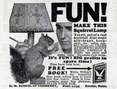 SQUIRREL LAMPS
