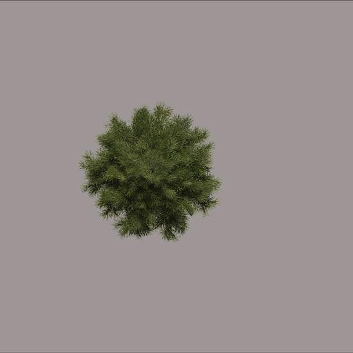 treetopdown