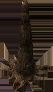 trunk145