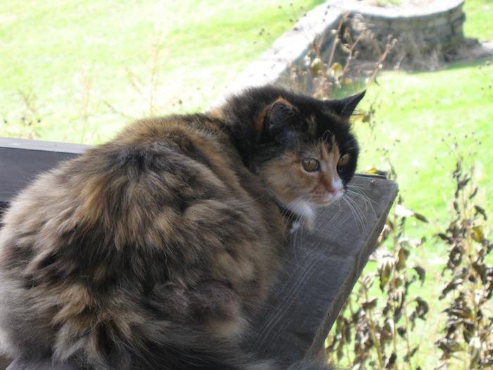 Sherpa the cat on the Taliesin terrace near Spring Green, Wisconsin
