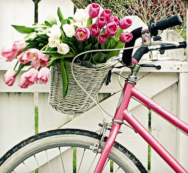 roses on a bicycle