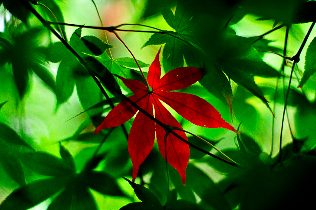 Autumn Leaves_Nature