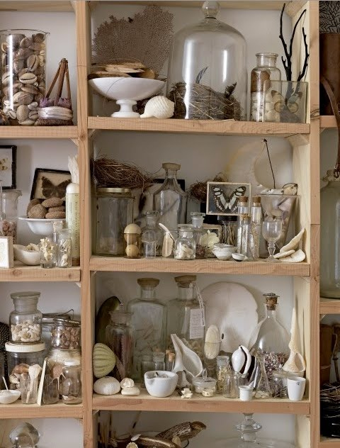 sibella-court-shelving-filled-with-vintage-shells-butterflies-eggs-nests-glass