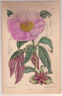 botanical-poppy-print