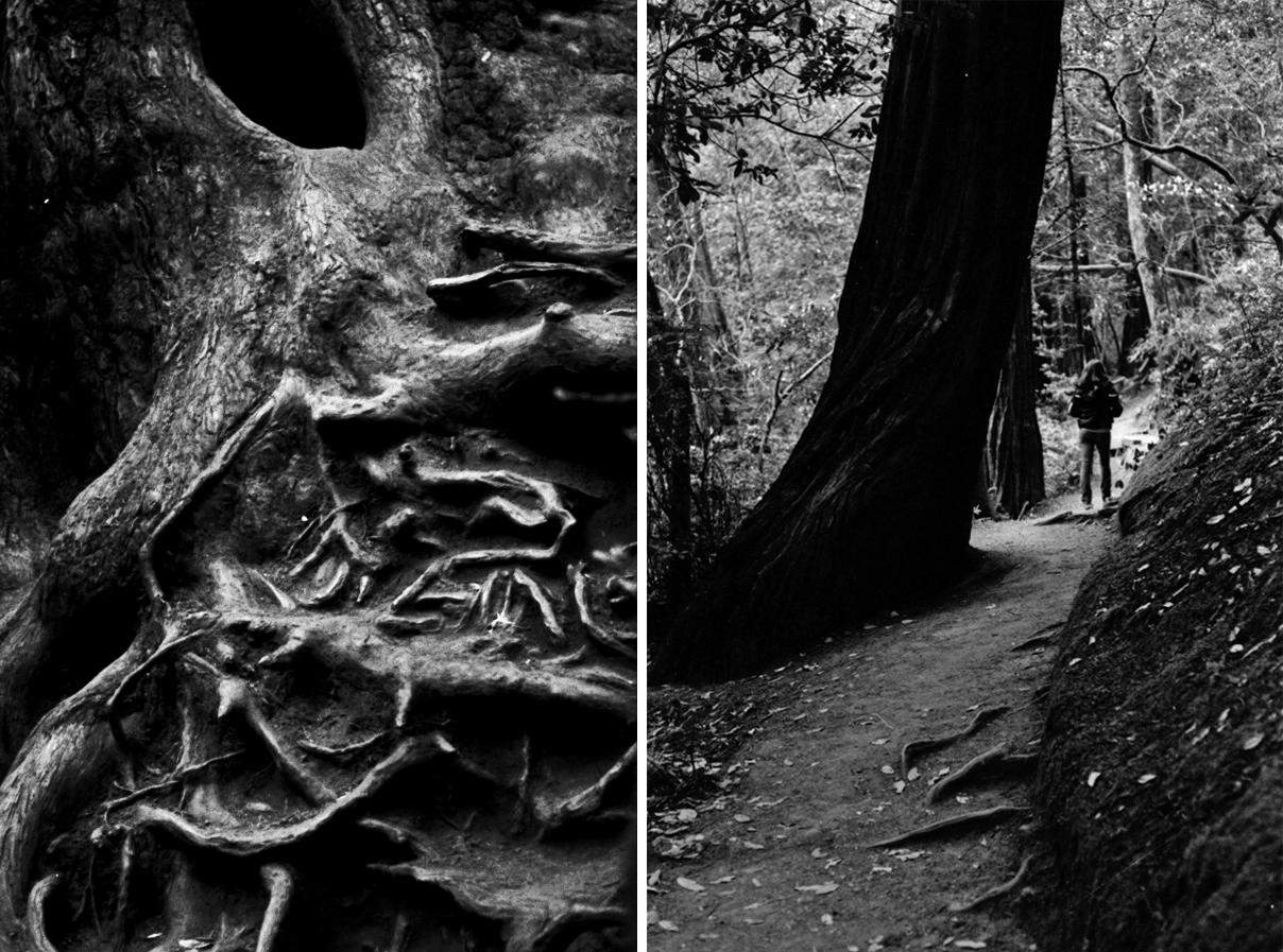 redwoodpair