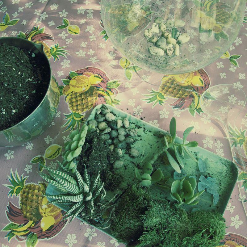 Succulent6