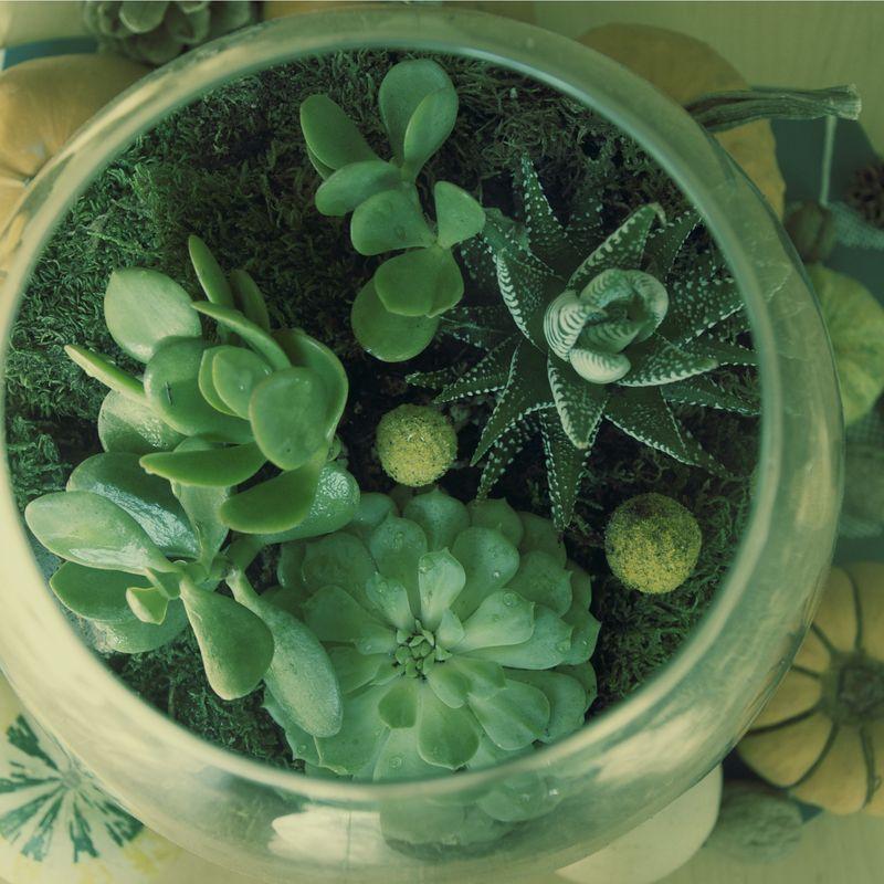 Succulent5