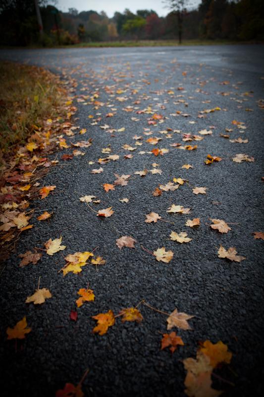 Fall_2010_03
