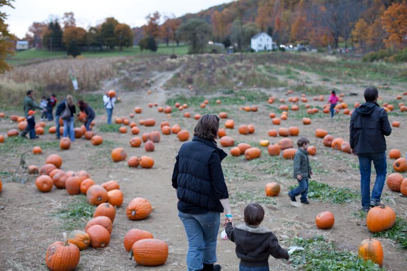 Pumpkin_2010_02