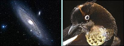 Galaxy_bird