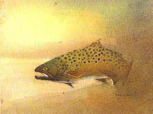 Brown_trout_3