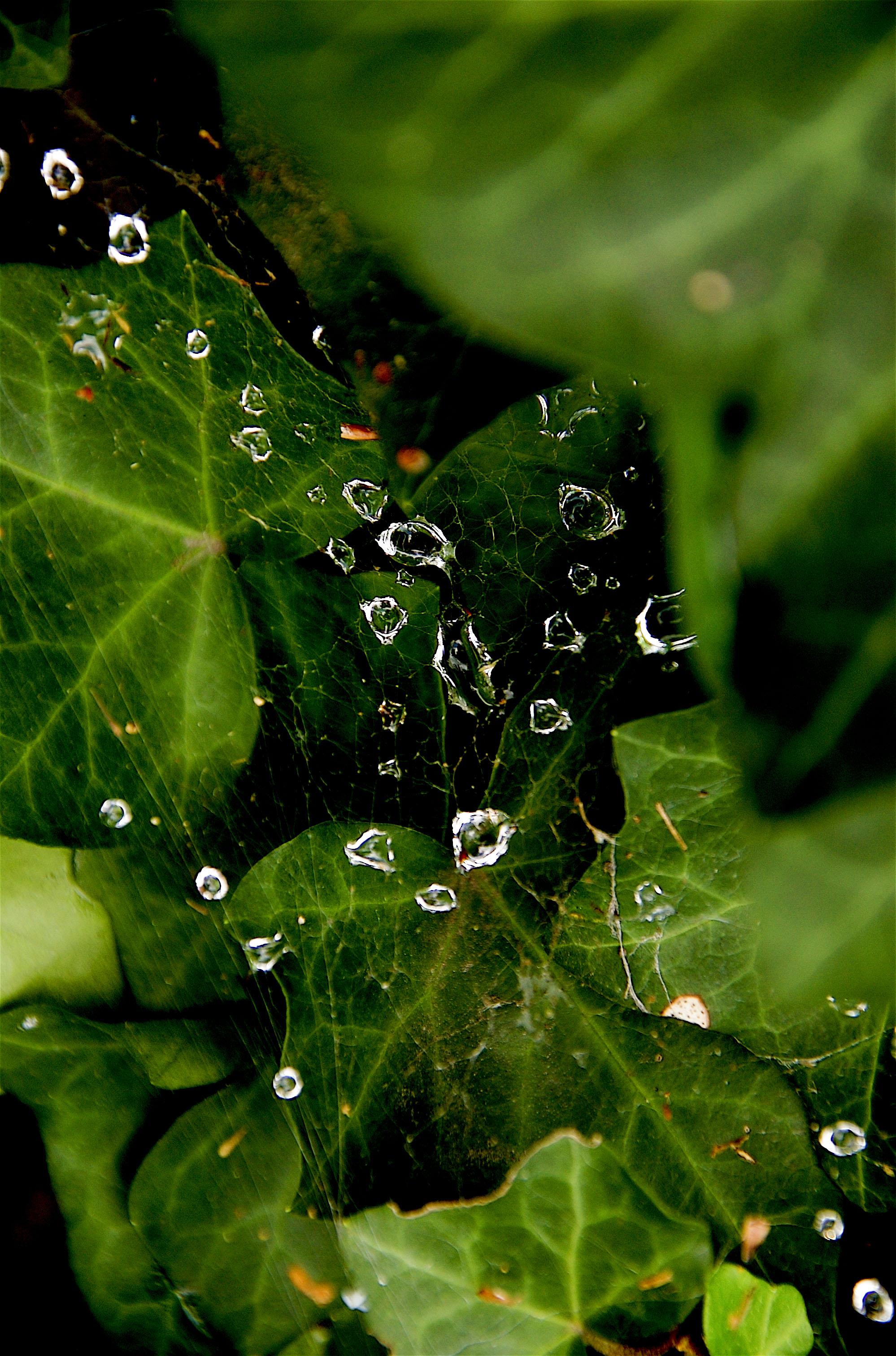 Dew droplets