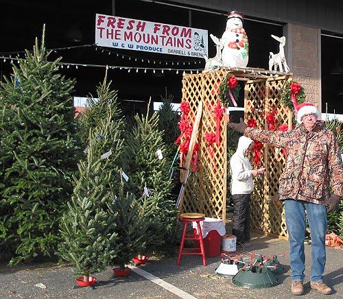 Christmas Trees Fresh Mtns