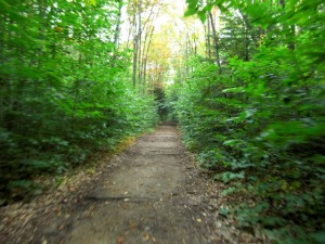 Lincoln Woods Trail (after Osseo Trail)